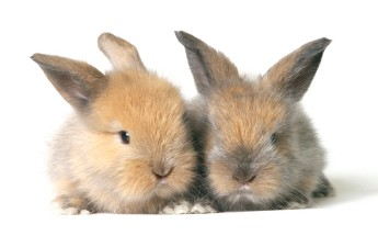 Baby rabbits by Wee Gan Peng @iStockphoto