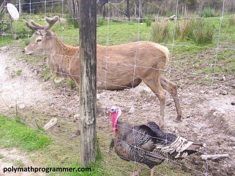 Moose and turkey
