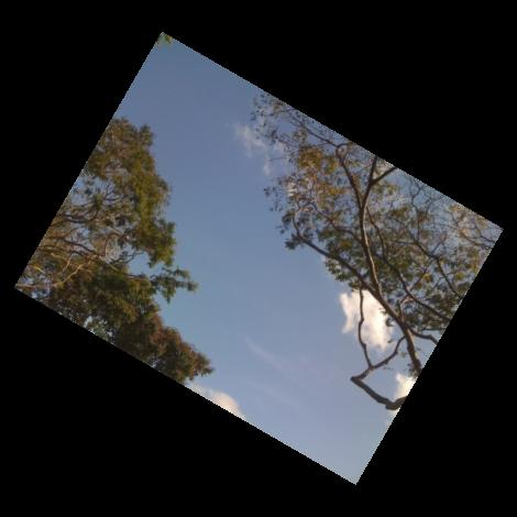 Rotated slanted treetop with sky