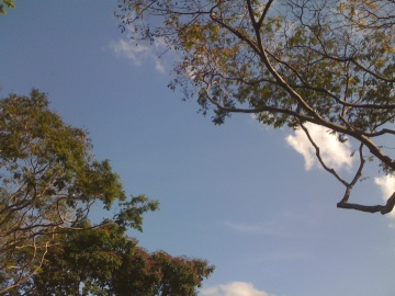 Slanted treetop and sky